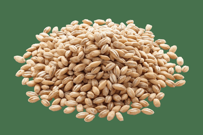 Barley export